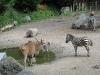 20110809_zoo-de-lille_008