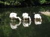 20110809_zoo-de-lille_017