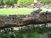 20110809_zoo-de-lille_030
